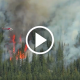 Wildfires in the United States